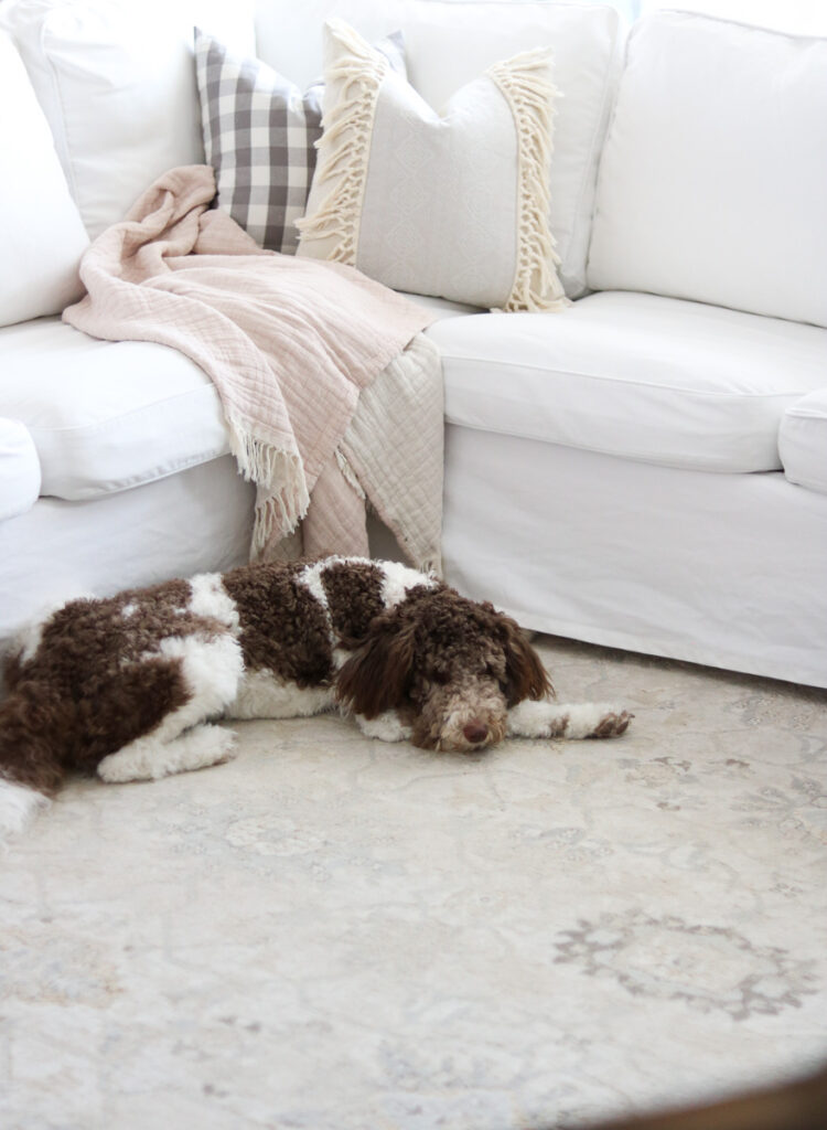 Aussiedoodle puppy in front of white Ikea Ektorp sectional